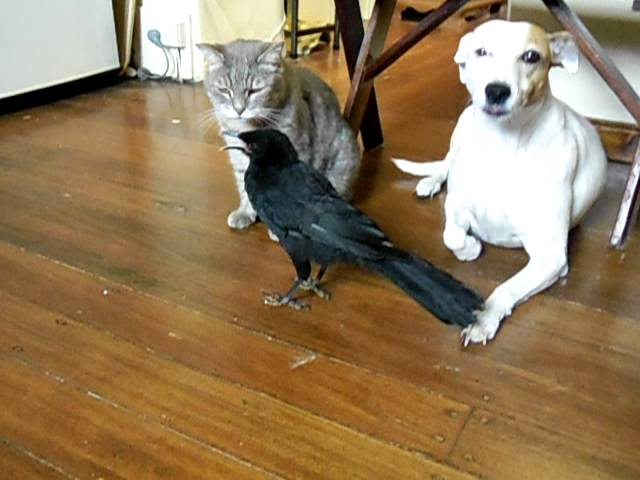 Adorable Bird Shares Food With Other Pets