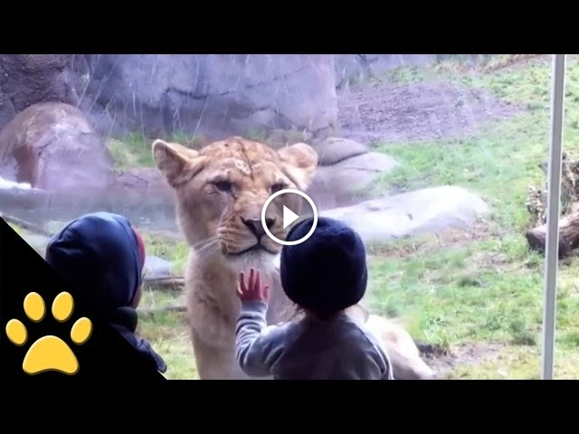 Adorable Kids Playing With Animals At The Zoo