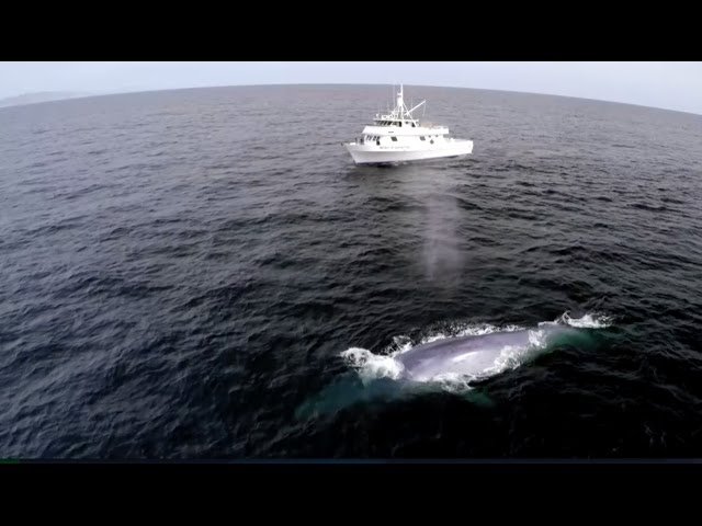 Blue Whale Has Perfect Comedic Timing